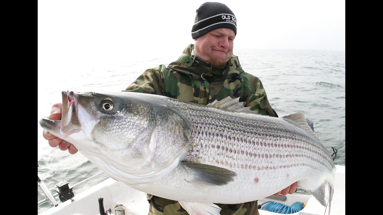 Trophy Striped Bass Fishing - Ass - Photo Xxx-4040