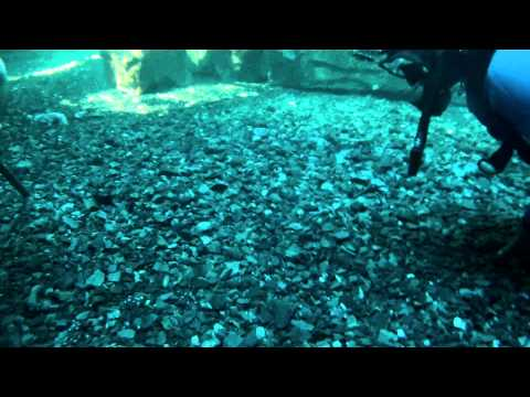 Duiken Cape Town - Two Oceans  Aquarium December 2012 Part 2