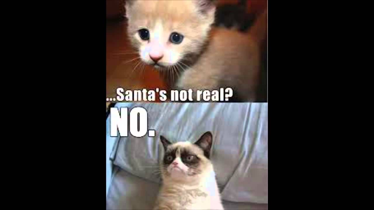 GRUMPY CAT PART Best Meme Memes Cute Cats YouTube - 17 cats that are angry grumpy and fed up with everything
