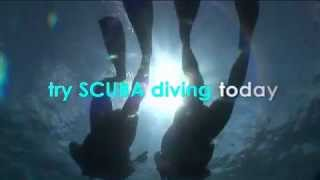 Sunlover Reef Cruises Diving Thumbnail