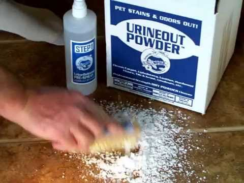 Clean Dog Urine From Tile Video 1
