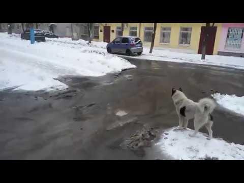 В Володарском районе Брянска разорвало трубу