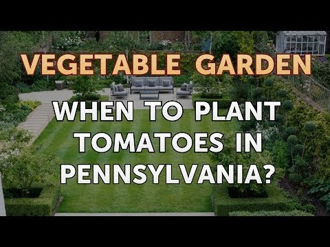 When to Plant Tomatoes in Pennsylvania?