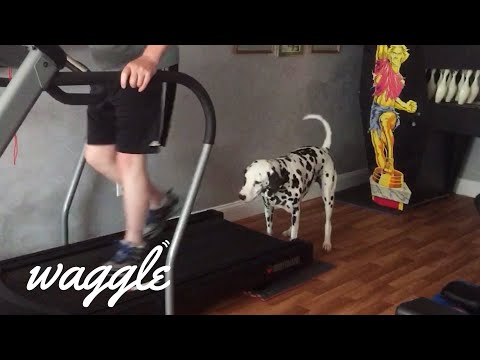 Athletic Pets | Funny Animal Compilation