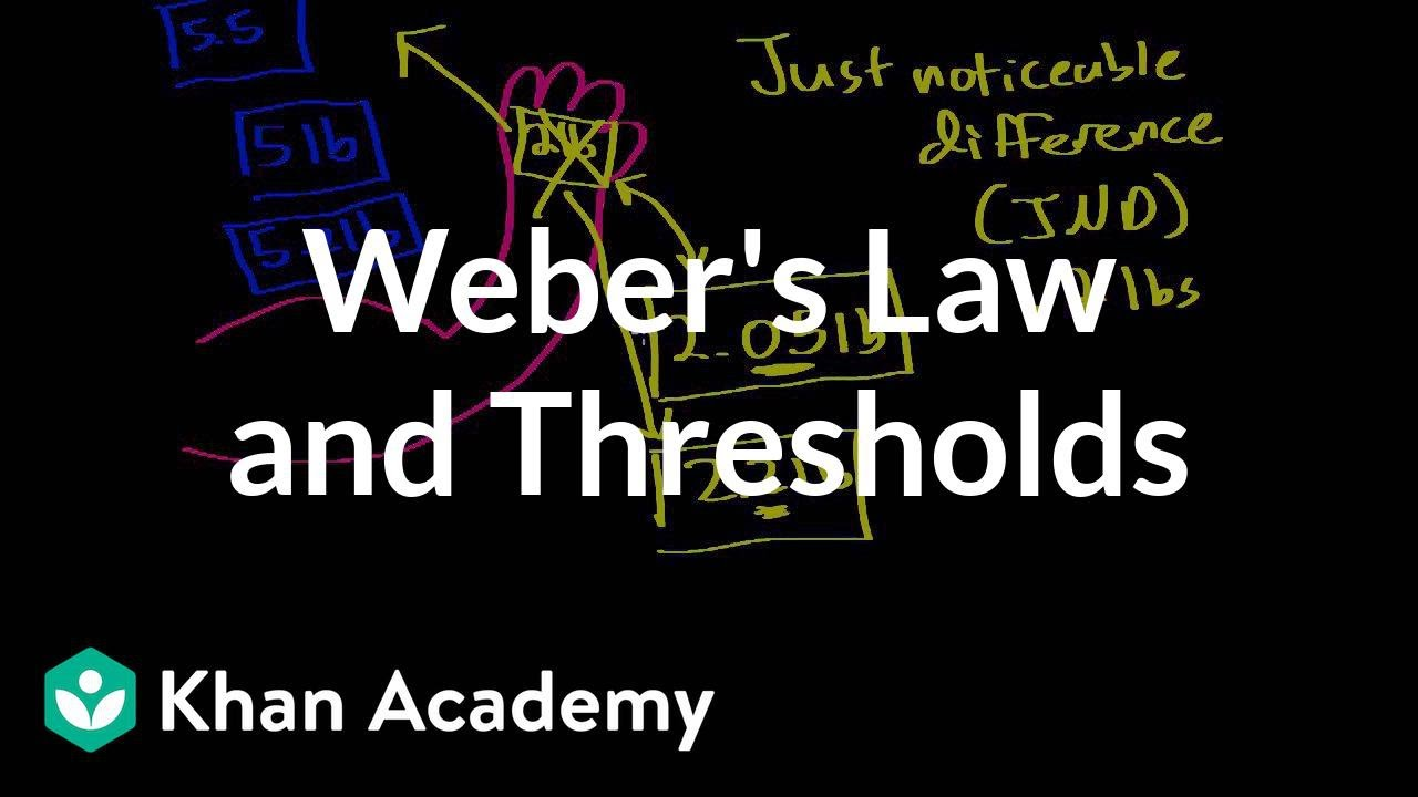Weber S Law And Thresholds Video Khan Academy