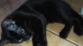 КОШКА И МЫШЬ. Почему кошка не ест мышь?