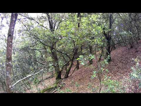 18/11/17 Chasse sanglier Ardèche au chêne