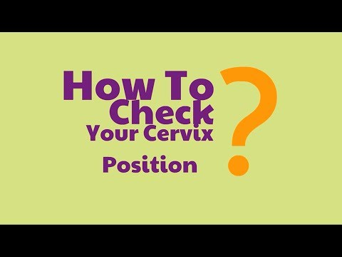 How to check cervix position during ovulation   Cervix Position During Ovulation