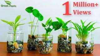 How to Make Indoor Water Garden From Recycled Materials | indoor hydroponic gardening//GREEN PLANTS