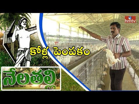 Chicks Poultry Farming | Ideal Farmer Ravinder Reddy Tips | Ranga Reddy Dist | Nela Talli | HMTV