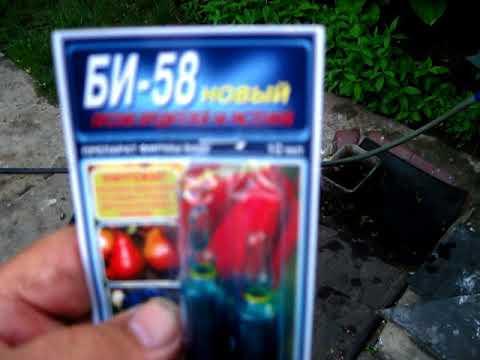 Опрыскивание растений  припаратом БИ 58 от всяких вредителей