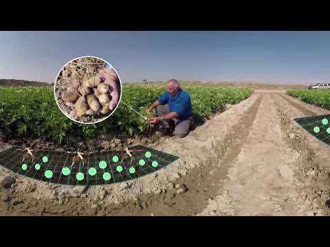 Image result for esn potato video