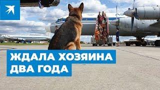 Пальма - собака, которая два года ждала хозяина во Внуково