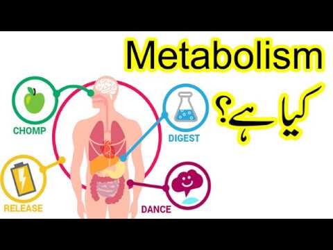 What is Metabolism in urdu   How to Fast Metabolism   Metabolism Remedy