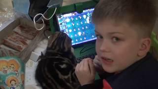 Владу 7 лет Человек паук Торт майнкрафт Планшет