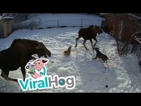 Viral Hog Cat And Mouse Video
