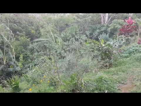The wind in Monteverde, Costa Rica