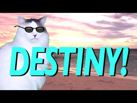 HAPPY BIRTHDAY DESTINY EPIC CAT Happy Birthday Song YouTube
