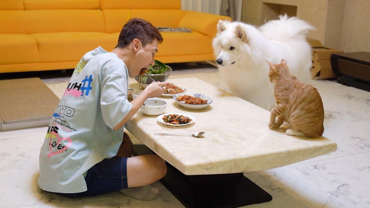 사람이 음식을 먹을 때 강아지의 반응