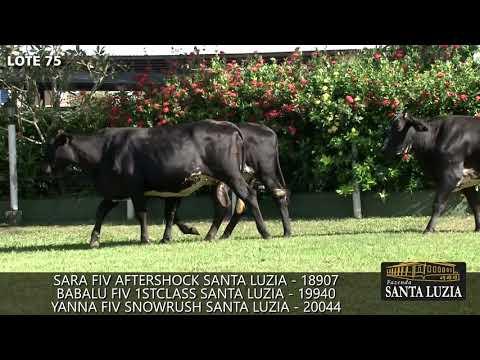 SANTA LUZIA   LOTE 75