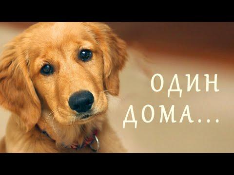 Песня про собаку, которая осталась одна дома / Пес Яшка дома - детская песня - Наталия Лансере