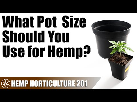 Choosing a Pot Size for Your Hemp Plants
