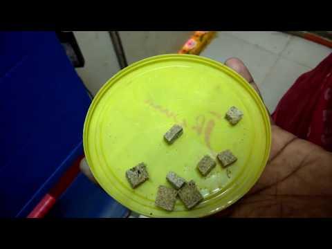 Feeding Tubifex Dried Worms