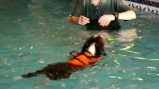 Puppy Torin Retrieving A Ball At Doggypaddle Canine Hydrotherapy
