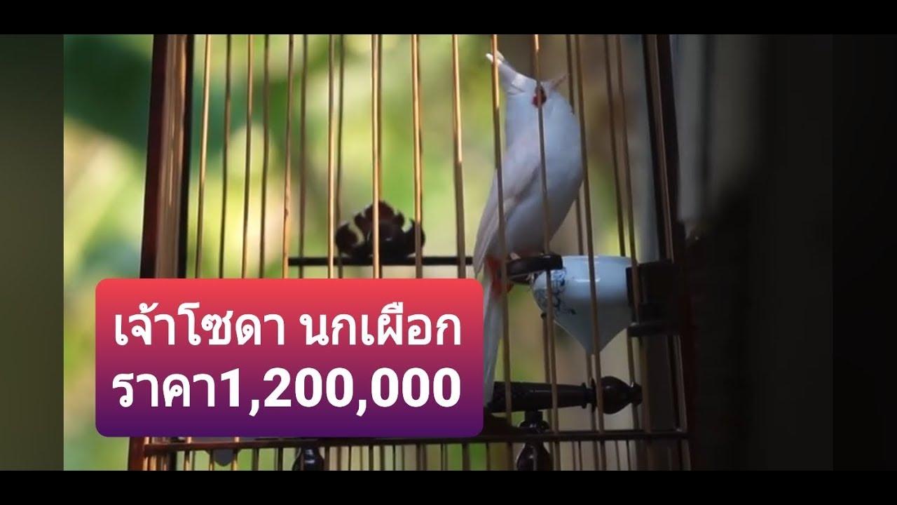 คลิปนกเผือกที่มีค่าตัวแพงที่สุด(ล้านสอง)