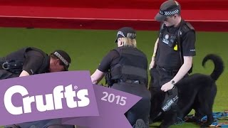 West Midlands Police Dog Display | Crufts 2015