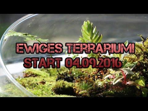 ewiges terrarium neu start youtube. Black Bedroom Furniture Sets. Home Design Ideas