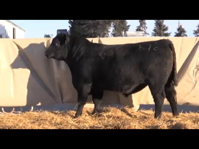 Marcy Cattle Company Lot 4