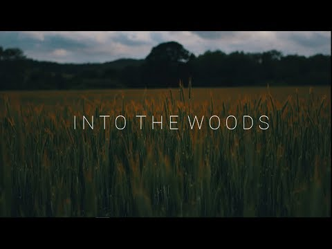INTO THE WOODS (4K)