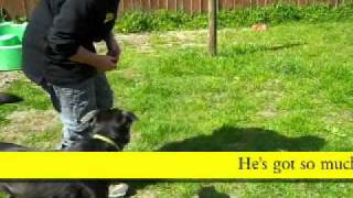 Dog Trust Merseyside: Junior Shows Off His Obedience Skills
