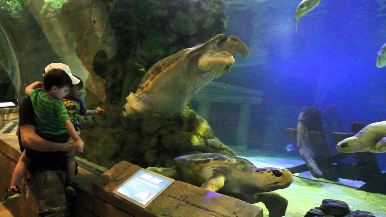 Trip to SEA LIFE® Minnesota Aquarium - Mall of America ...