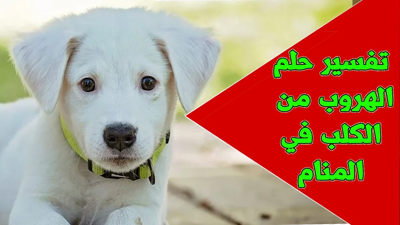 حلم الهروب من الكلب للمتزوجة والعزباء في المنام حلم مطاردة الكلب في المنام حلم الهرب من الكلب Youtube