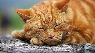Трейлер Коты-Воители. История выживания | Фильм HD
