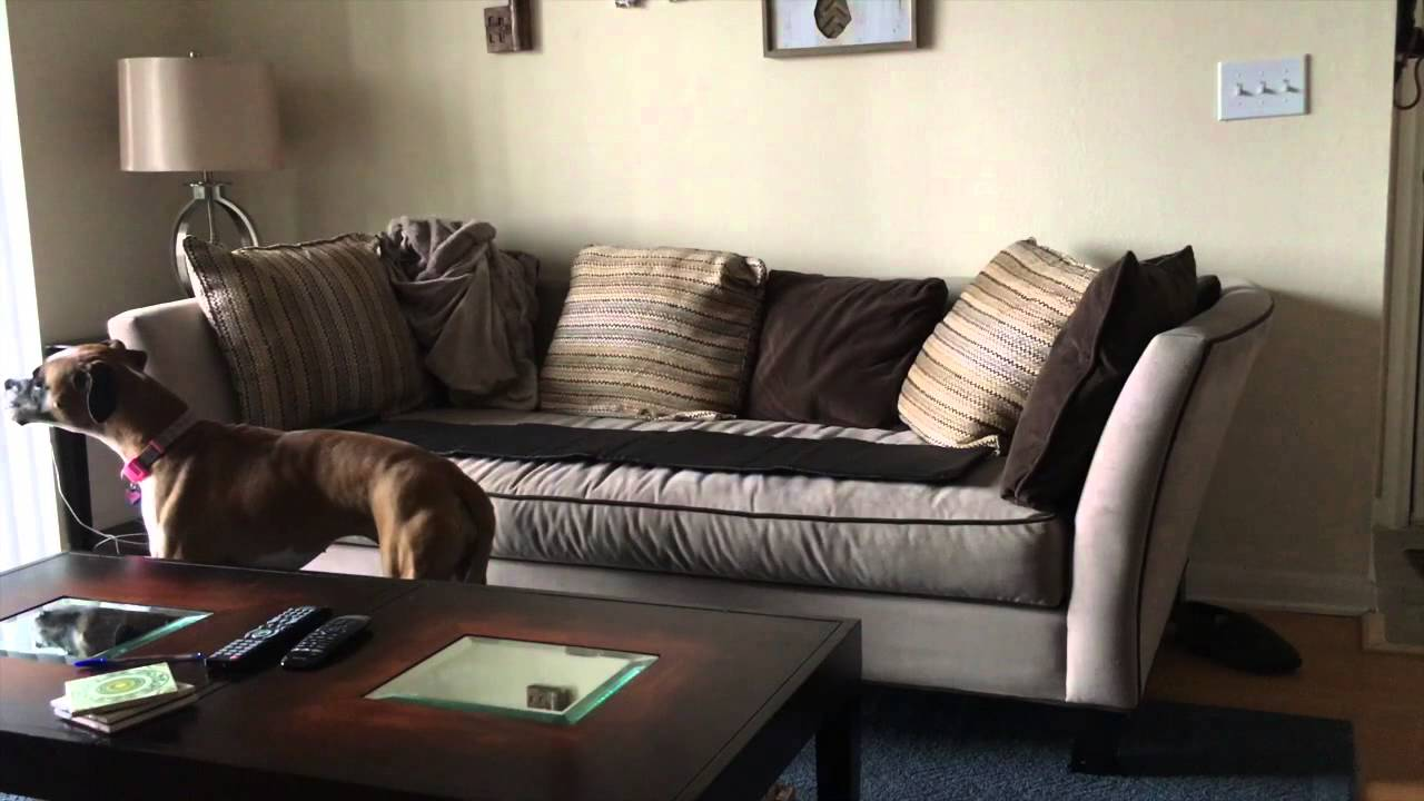 Great Sofa Scram