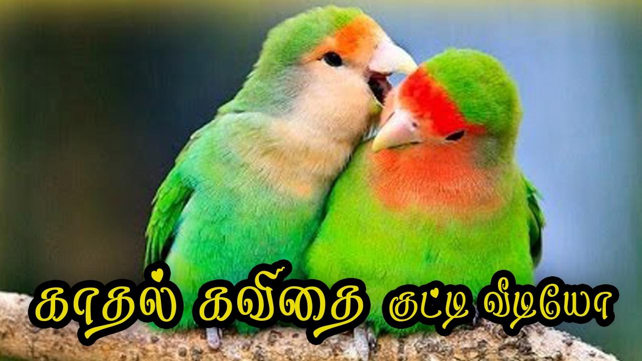 Love Bird Quotes ??❤ Tamil Kadhal Kavithai Love Quotes In Tamil 077