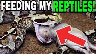 FEEDING MY REPTILES!!!