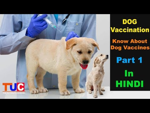 Know About Dog Vaccines : Dog Vaccination part 1 : TUC : The Ultimate Channel