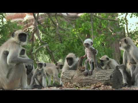 Monkey  A Cup Board  Love is Seldom true