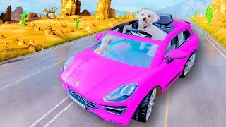 PUPPY LEARNS HOW TO DRIVE!!!