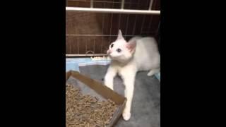插蘇鼻的貓13 頸部運動