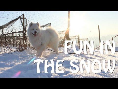 ☆ Fun in the Snow ☆