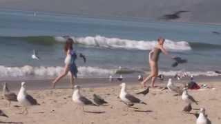 Приколы с птицами