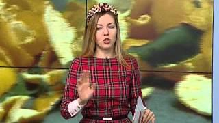 Коты и ёлки: как уберечь новогоднюю красавицу от домашних питомцев