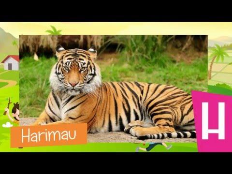 Mengenal Huruf ABC - Mengenal Nama-nama Hewan Bahasa Indonesia |HD