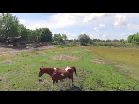 farm-for-sale-near-orlando-florida