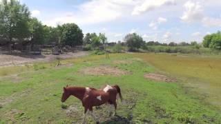 FARM FOR SALE NEAR ORLANDO FLORIDA